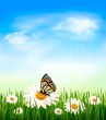 Nature background with green grass and flowers witn butterfly. V