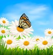 Nature background with spring daisy flower and butterfly.