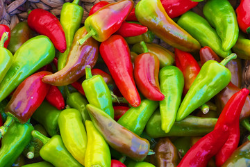 red green yellow purple hot Peppers