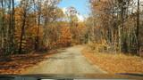 Driving down Autumn road.