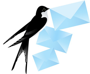 Swallow brining mail