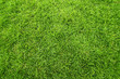 Green field of grass background