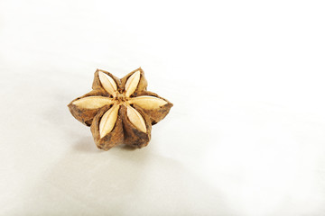 Sacha-Inchi pod, white and brown seeds called sacha-Inchi