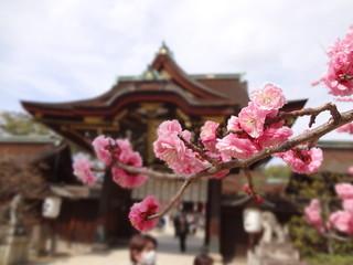 北野天満宮  梅の花