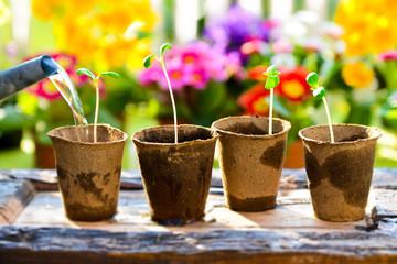 Jungpflanzen