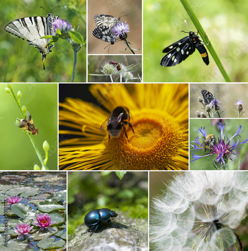 Collage of insect and flowers