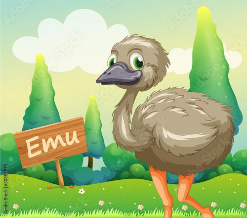 A young ostrich beside a wooden signboard