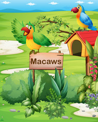 Two colorful parrots above a signboard and a pethouse