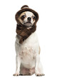 Chihuahua (2 years old) sitting and wearing a knit hat, isolate