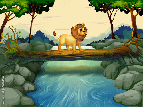 A lion crossing the river