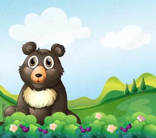 A big bear sitting in the garden