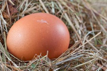 braunes Hühnerei im Nest