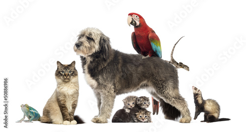 Group of pets - Dog, cat, bird, reptile, rabbit,...
