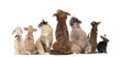 canvas print picture - Rear view of a group of pets, Dogs, cats, rabbit, sitting