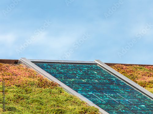 Solar panels on a roof covered with sedum for isolation - 50888707