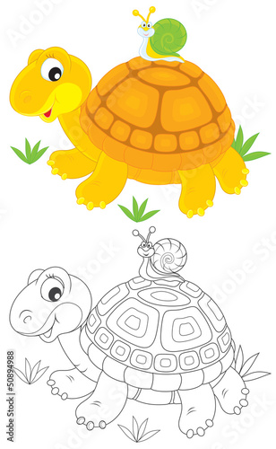Tortoise and snail