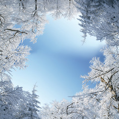 Winter frame of trees covered by snow