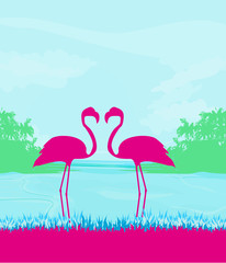 Flamingo couple in wild nature landscape