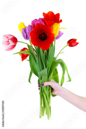 Beautiful tulips in hand isolated on white