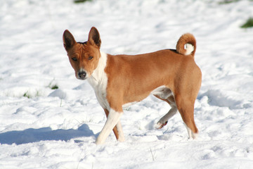 red dog throwing shadow on white snow