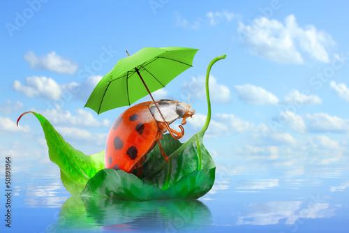 Little ladybug floating on the leaf. Rainy season concept. - 50898964