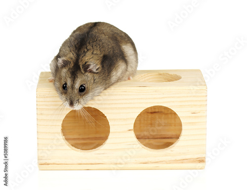 Dwarf Hamster on Wooden Block