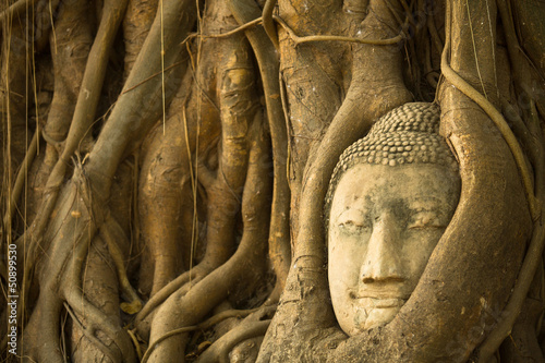 The Head of Buddha in Wat Mahathat, Ayutthaya