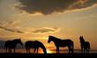 Fototapeten,pferd,pferd,zuchthengst,zuchthengst