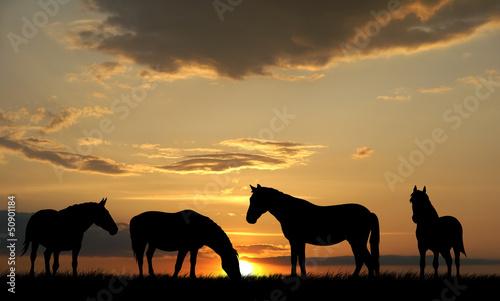 Fototapeten,pferd,pferd,hengst,hengst