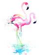 Leinwanddruck Bild - flamingo