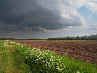 dramatic field