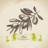 Olive. Hand drawn illustration