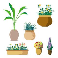 鉢植え植物