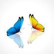 Duo de papillons