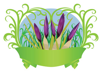 Spring crocuses with ribbon