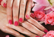 Close-up image of beautiful female hands and rose petals