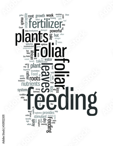 All About Foliar Feeding African Violets