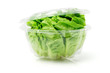 Green Fresh Lettuce