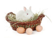 white rabbit in a basket and eggs