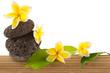 décor, végétal, floral, minéral