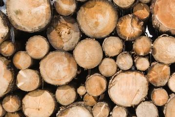Catasta di tronchi
