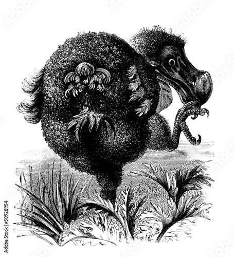 Extinct Bird : Dodo - Dronte
