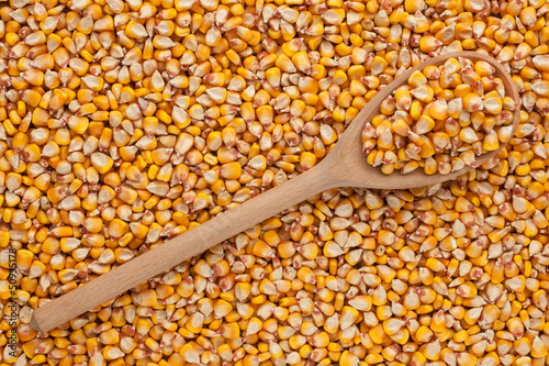 Wooden spoon with corn  is on a bunch of  corn