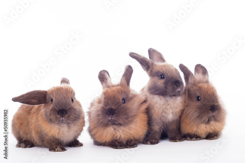 Four rabbits isolated on the white.