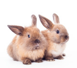 Two rabbits isolated on the white.