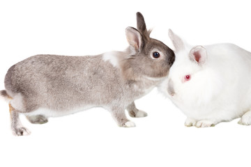 Lovable little rabbit companions