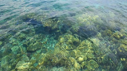 See the crystal clear sea water.