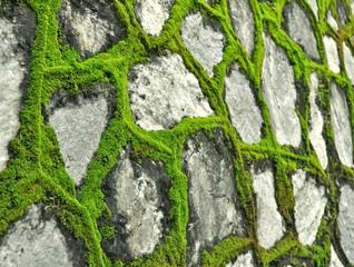 Каменная стена с мохом