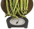 Asparagus bunch in a scales of weight