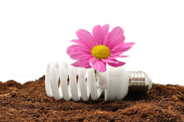 Energy saving light bulb and flower